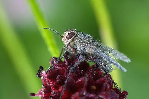 32 fotos macro de insectos blogerin - Insectos en casa fotos ...