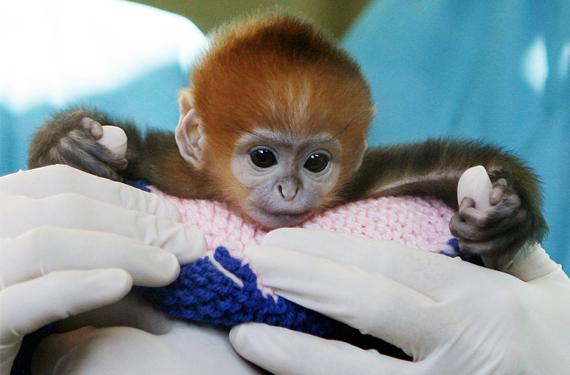 fotos de animales en zoologicos (1)