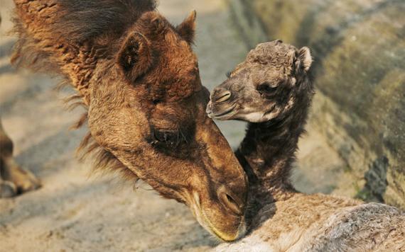 fotos de animales en zoologicos