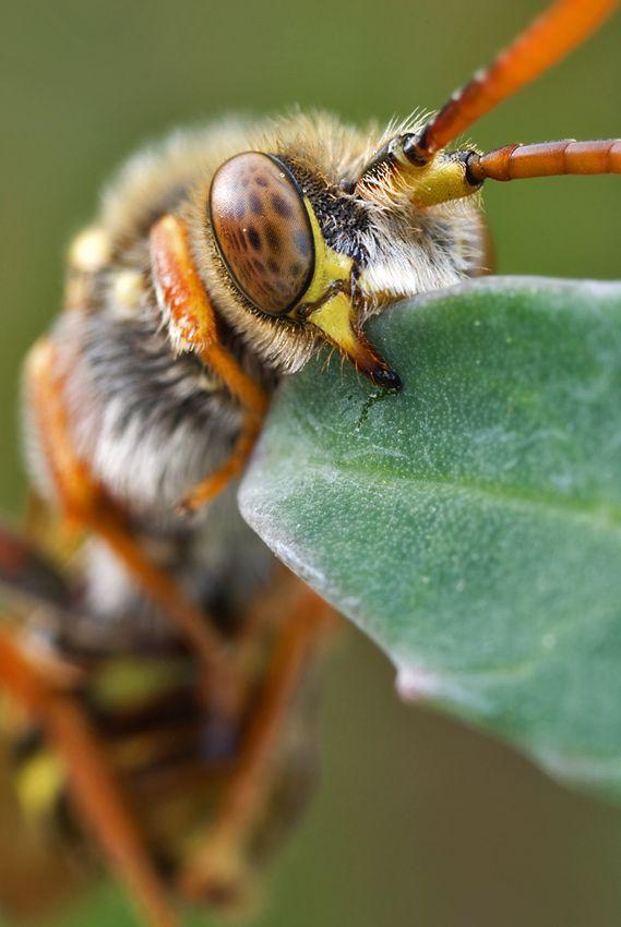 29 fotos macro de insectos blogerin - Insectos en casa fotos ...