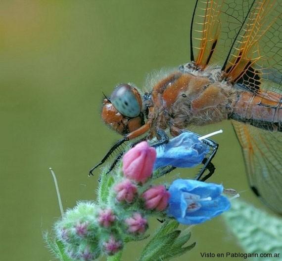 Fotos macro insectos pablog