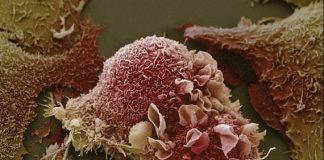 Fotos microscopicas cuerpo