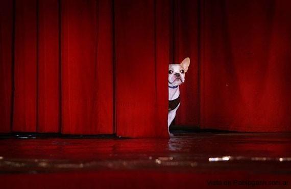 Imagenes graciosas de perros