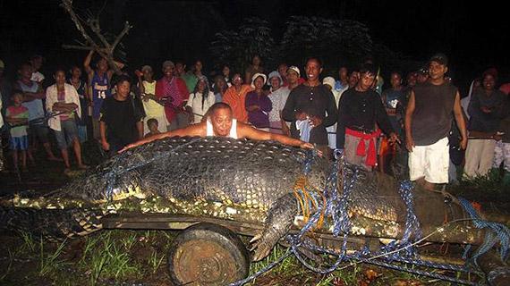 cocodrilo mas grande del mundo