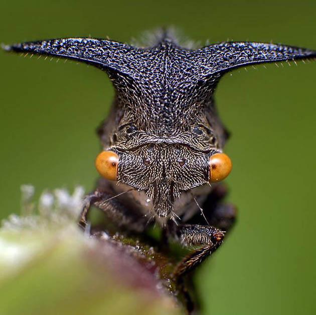 15 fotos macro de insectos blogerin - Insectos en casa fotos ...
