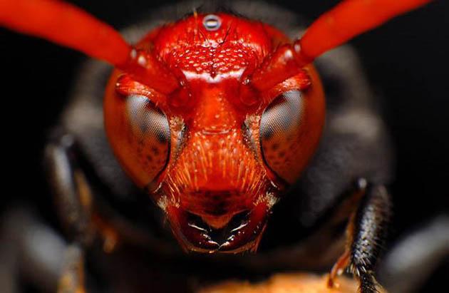 15 Fotos macro de insectos (7)