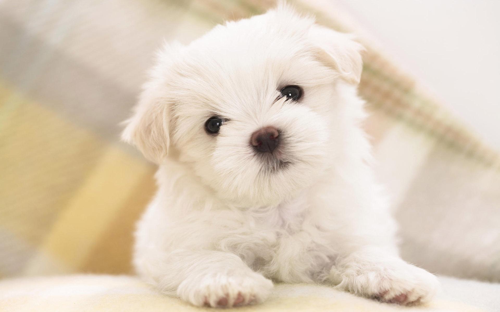 Hoy traemos 20 wallpapers de perros para que puedas poner a estos ...