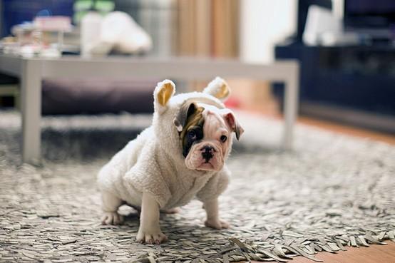 Imagenes de perros (4)