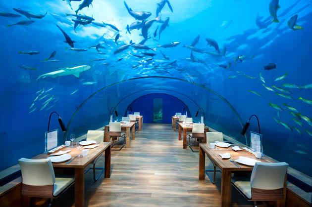 Resultado de imagen de ithaa restaurante submarino, maldivas